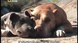 Download [141109].重新愛上比特犬 Mp3 and Videos