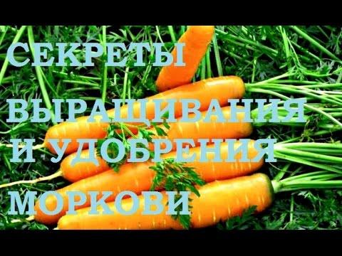 Блюда из моркови - рецепты с фото на  (1458
