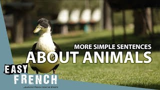 More simple sentences about animals | Super Easy French 48