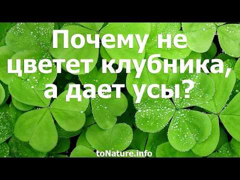 Вопрос: Надо удалять кусты клубники, на которых нет цветов и ягод Или появятся?