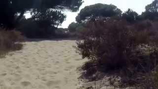 De Cruising Gay por Málaga [1]: Cancaneo con sexo al aire libre en las dunas de Cabopino de Marbella
