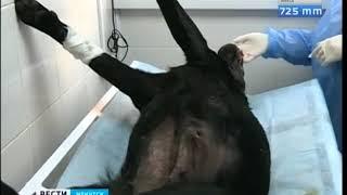 Собаку поводыря отравили догхантеры в Иркутске