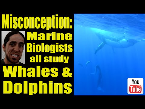 Misconception: Marine Biologists All Study Whales and Dolphins | SciAll.org