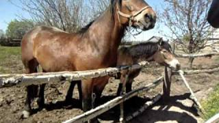 лошадка ебать