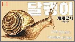 자연물 + 생물체 2 COMBO !! 달팽이 개체묘사 …