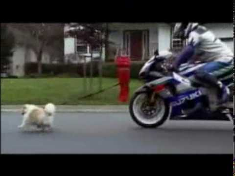 motorrad mit hund kawasaki youtube. Black Bedroom Furniture Sets. Home Design Ideas