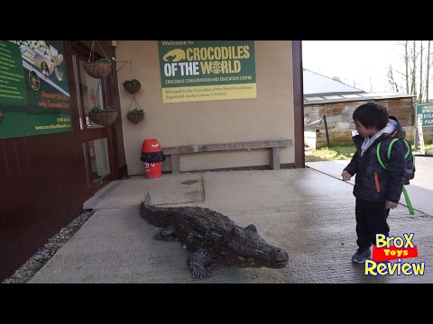 Crocodiles of the World Fun day out Oxford England Part 1