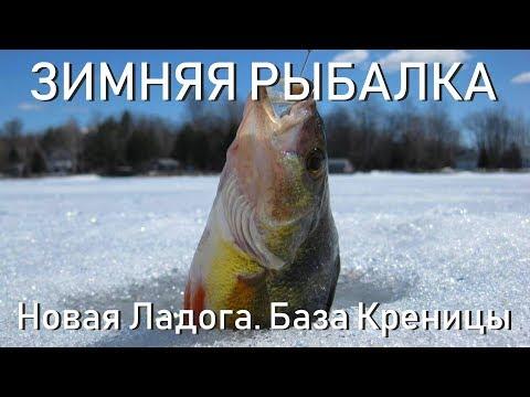 Зимняя рыбалка Новая Ладога. База Креницы. Ловля окуня 01.02.2019