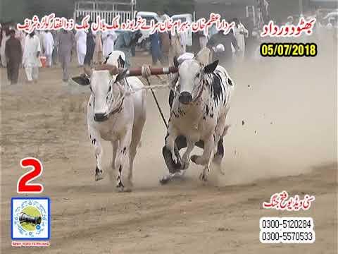 Bul Race In Pakistan Sunny Video Fateh Jang   05 07  2018 NO2