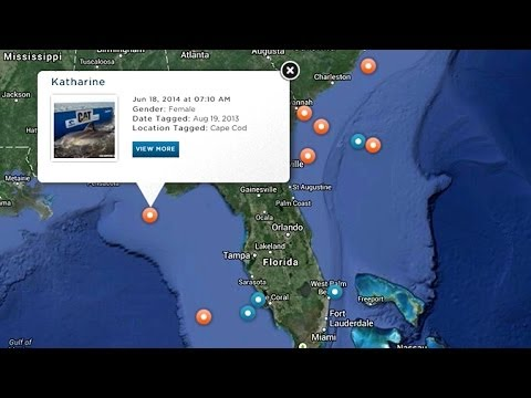 Track Great White Sharks Online As They Swim The World's Coastlines