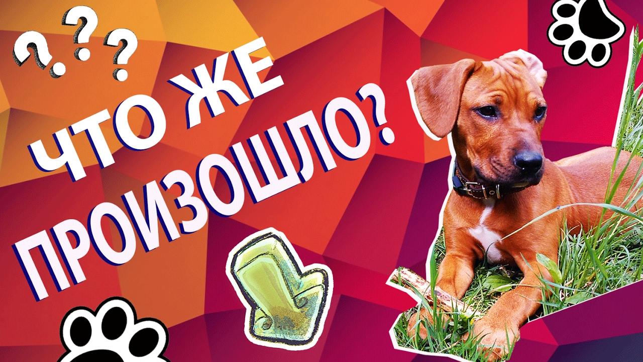 что дать собаке от аллергии лекарства