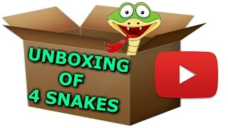 Unboxing Video of my new 4 baby corn snakes!!!!!!