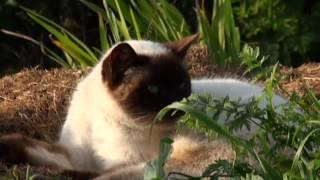ANIMALES Gatos y gatas de Candás stray cats