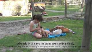 Alpha Canine Professional - Dog Trainer Courses - Puppies