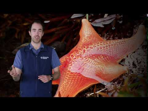 Fast Ocean Facts — Starfish Eyes