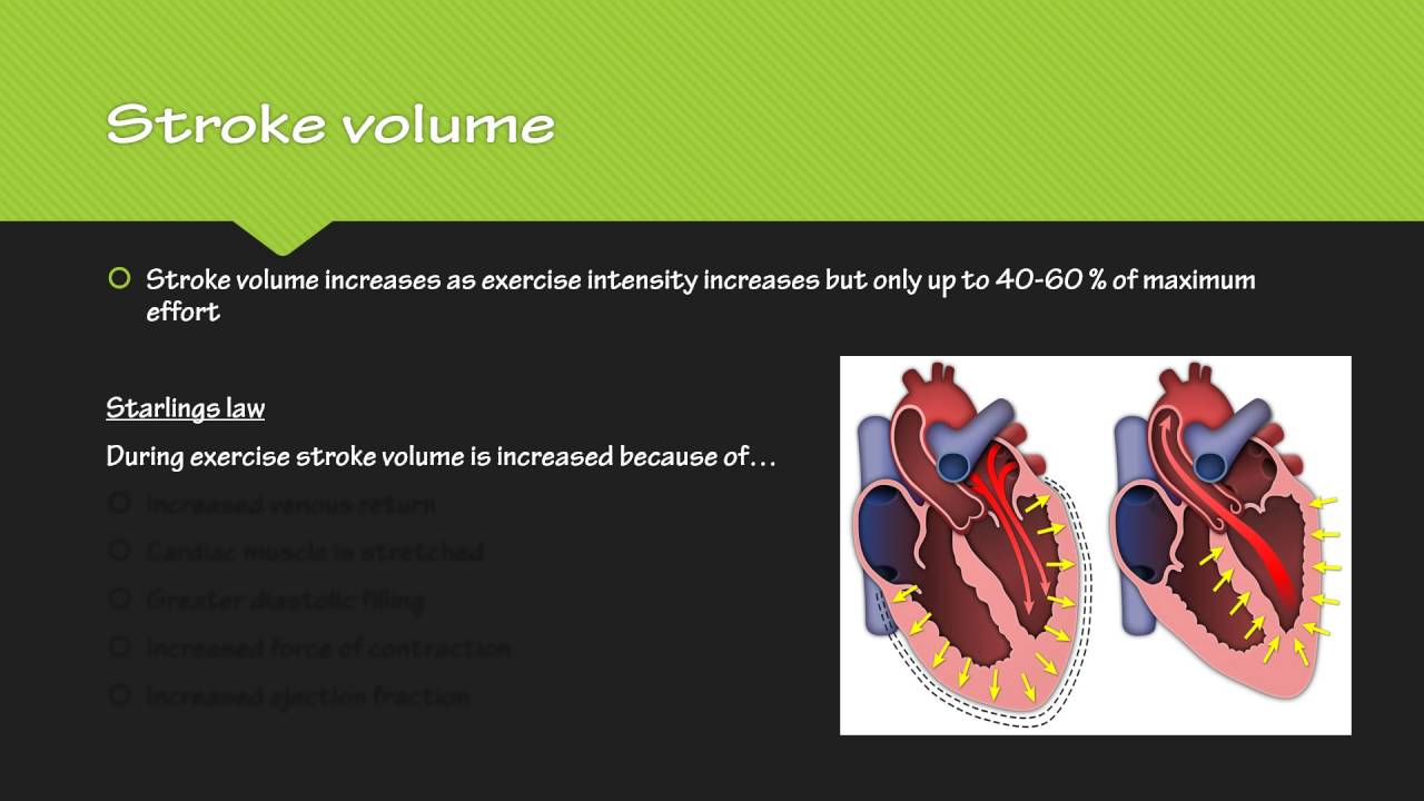 Anatomy and Physiology Lesson 2 stroke volume, heart rate and ...