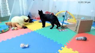 Kitkat Playroom: Friday Night KitNipBox Pawty! thumbnail