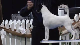 2016 Royal Adelaide Show - Dog Judging Monday 5 September