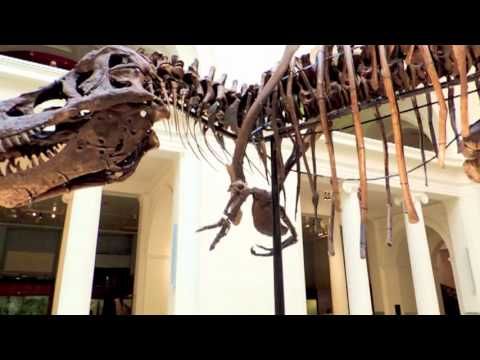 Field Museum, Chicago - Dinosaurs