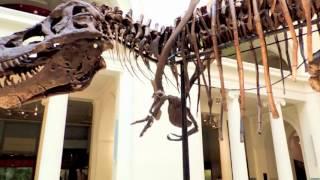 Field Museum, Chicago - Dinosaurs