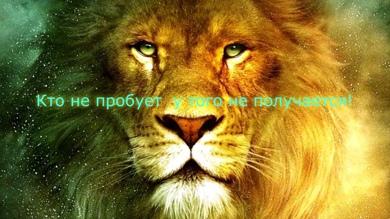 Neverwinter  Простые пухи  Земли не за 20кк!!!  М18