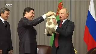 Berdimuhamedow Putine alabaýy sowgat berdi