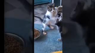 Прикольное видео про животных#shorts