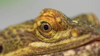 Reptile Photo Shoot