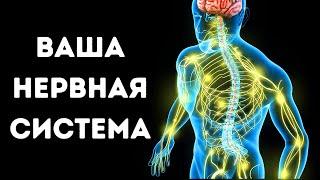 Путешествие по нервной системе человека