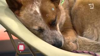 Mulheres - Dicas Pet: Comportamento canino (22/09/15)
