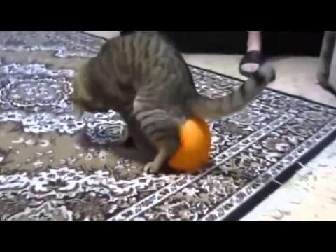 Про котиков и собачек -