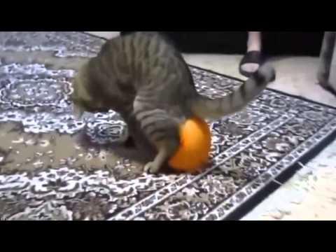 Смешное видео про котов - YouTube