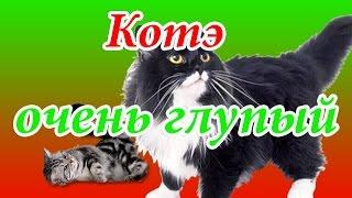 #СуперКнопка. Кот и валерьянка./ #The SuperButton. The cat and the Catnip