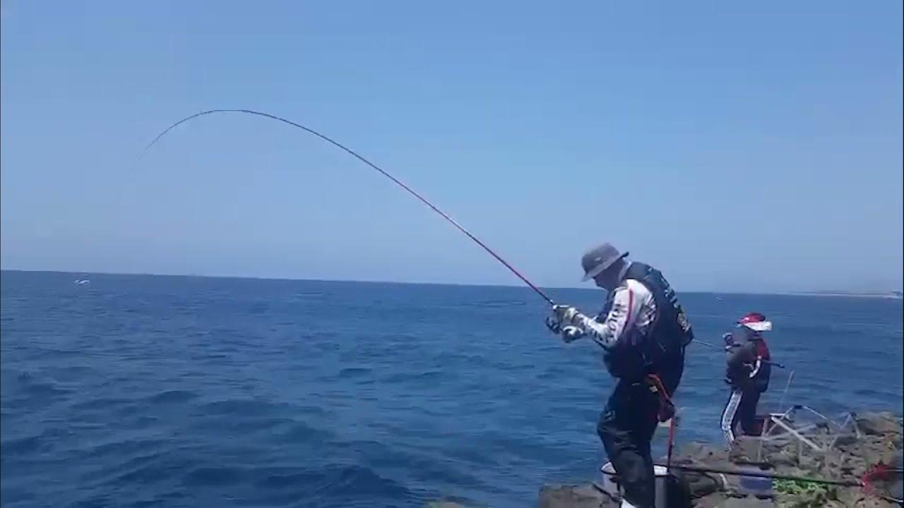 서귀포 범섬의 긴꼬리 벵에돔