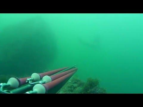 Pesca sub Venezia:Incontri ravvicinati del 3° tipo.