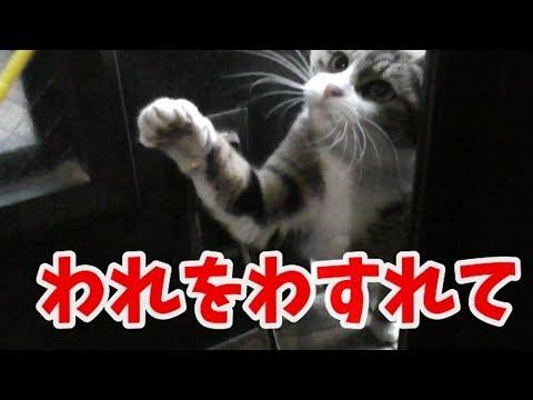 野良猫かつ緒 人馴れしていない猫 互いを認め合うこと
