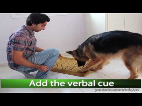 """Dog Trick Tutorial: """"Clean Your Paws!"""""""