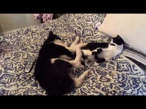 Cute cat and dog play fighting (must see)
