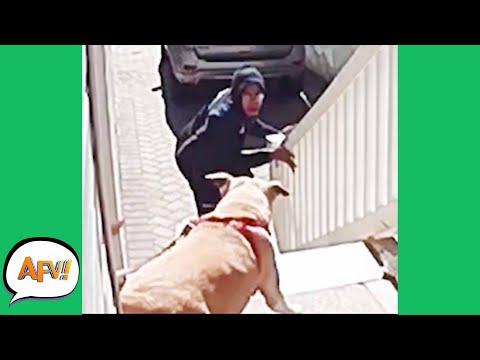 Barking Down the FAIL! 😱   Funny Security Fails   AFV 2021