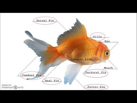 5 01 Bird, Fish, Amphibians, Reptile Anatomy