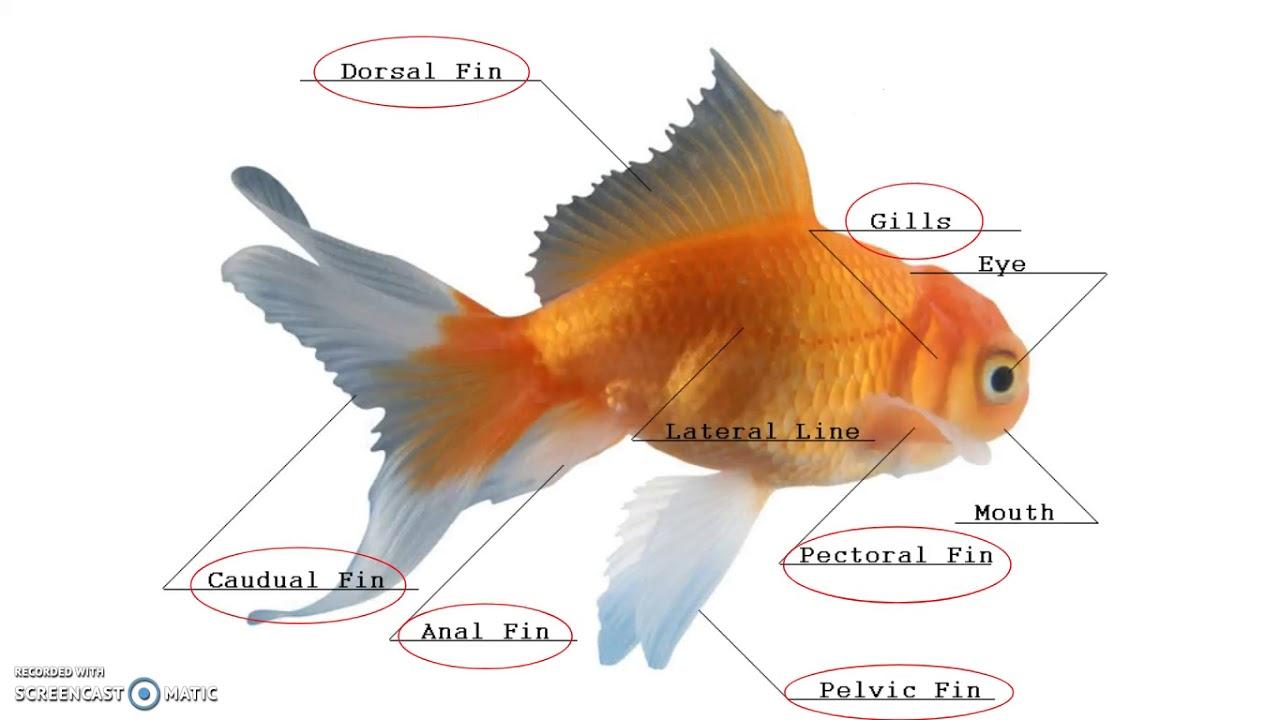 5 01 Bird, Fish, Amphibians, Reptile Anatomy - YouTube