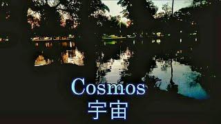 Cosmos 宇宙 (Ambient Music)