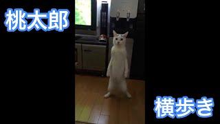 立って横歩きする猫 thumbnail