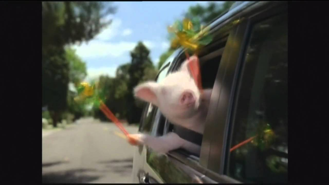Geico Commercial Did The Little Piggy Cry Wee Wee Wee All The Way
