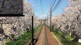 嵐電(京福電鉄)北野線 桜のトンネル 前面展望 鳴滝~宇多野間 Cherry tunnel, Randen Kitano Line Kyoto (2019.4.4)