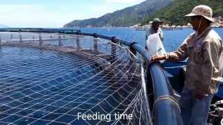 Marine Farms Vietnam 2012
