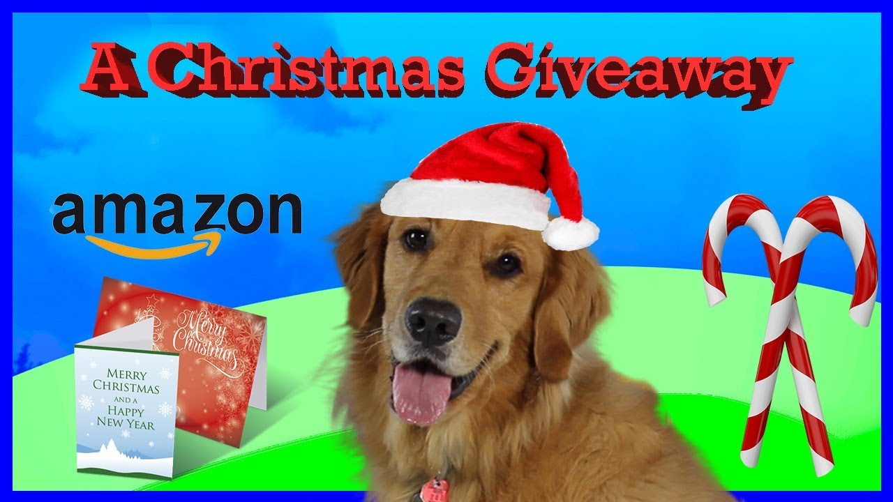 bo the golden retriever makes out christmas cards a christmas giveaway