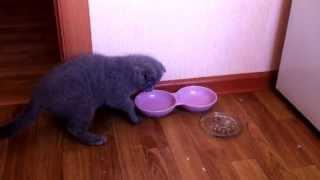 Кошка и миска