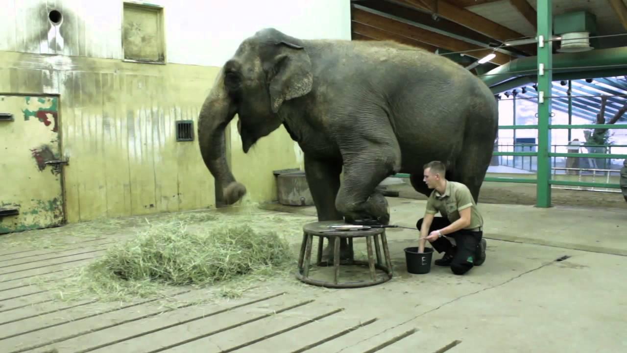 Spiel Elefant