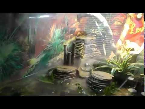 Semi Aquatic Turtle Habitat : Semi aquatic tank - YouTube